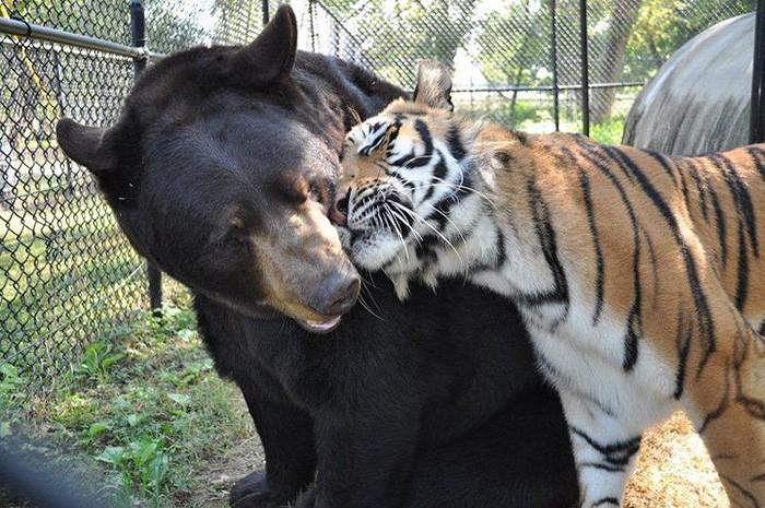 animais (Foto: Noah's Ark)