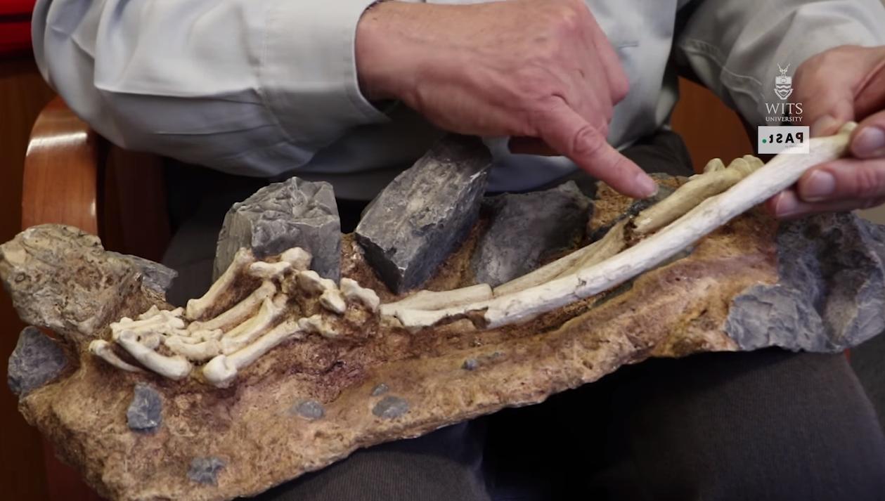 Clarke mostra parte da ossada encrustada na rocha em que foi encontrada (Foto: Universidade de Witwatersrand)
