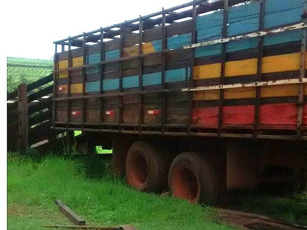 Suspeitos atolaram caminhão ao tentar furtar gado em sítio em Monte Alto, SP (Foto: Polícia Militar/Divulgação)