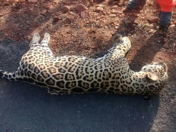 Segundo Polícia Militar de Colinas acidentes com animais silvestres não são comuns no local  (Foto: Divulgação/Joabe Silva)