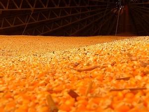 Milho no armazém em Mato Grosso (Foto: Reprodução/TVCA)