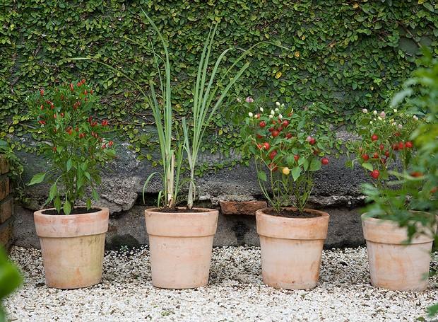 Vasos de cerâmica têm capim-limão e variedades de pimenta. Ficam próximos à parede forrada de unha-de-gato (Foto: Evelyn Müller/Editora Globo)