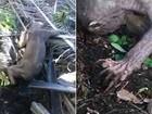 Trabalhadores indonésios flagram criatura bizarra em plantação