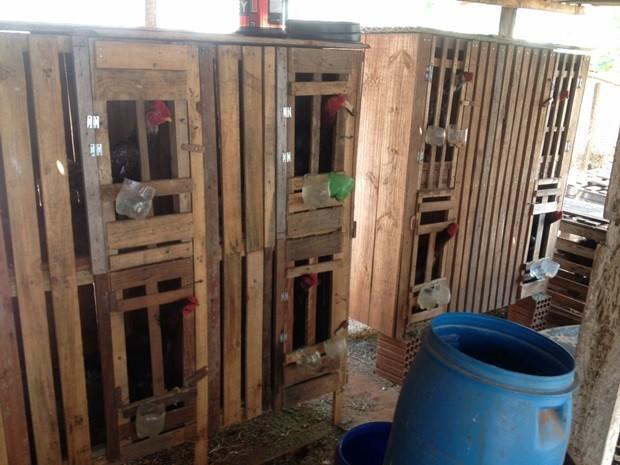 Aves foram encontradas em situação de maus-tratos em gaiolas (Foto: Digulgação/Polícia Ambiental)