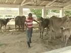 Exposição agropecuária reúne quatro mil animais em Fortaleza, no CE
