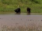 Pequenos agricultores comemoram a chuva no sertão do RN