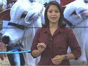 Chrystiane Gonçalves apresenta o Gazeta Rural (Foto: Reprodução/ TV Gazeta)
