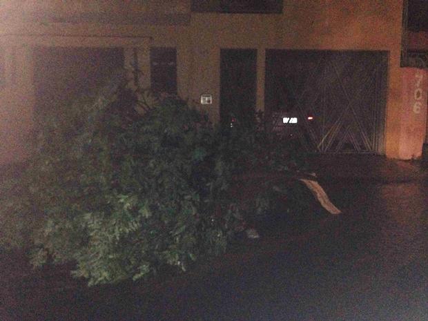 Árvores foram arrancadas com a força do vento (Foto: Reprodução / Aplicativo TEM Você)