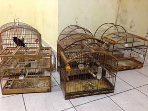 Guardas municipais são detidos com 25 pássaros silvestres em Petrópolis (Foto: Maria Valente/Inter TV)