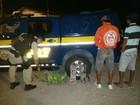 Polícia apreende 43 pássaros silvestres em Caucaia, no Ceará
