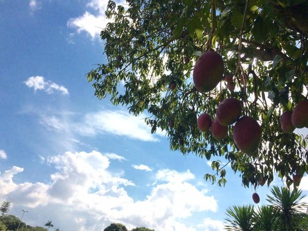 Sol intenso nesta segunda-feira (30) em Campo Grande (Foto: Isabela Cavalcante/G1 MS)