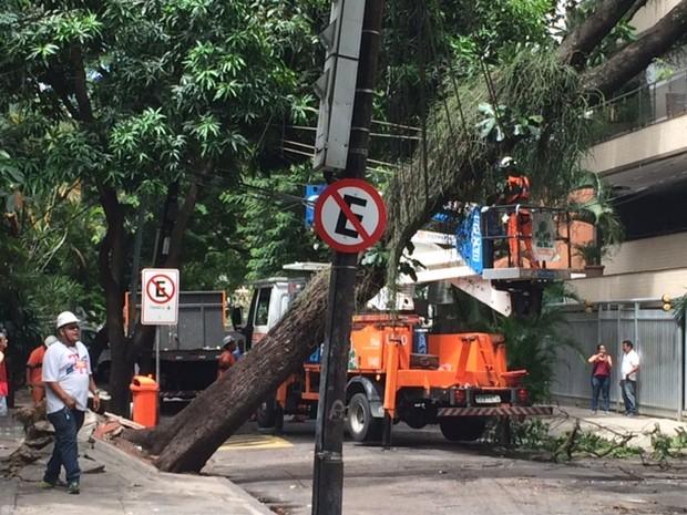 Árvore cai no Jardim Botânico, Zona Sul do Rio (Foto: Alba Valéria Mendonça/G1)