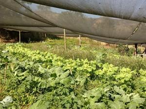Produtores substituiram a produção convencional com uso de agrotóxicos e fertilizantes químicos (Foto: Divulgação/ Rio Rural)