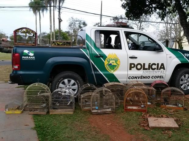 Polícia Ambiental apreendeu 110 pássaros silvestres nesta terça (18) (Foto: Divulgação/Polícia Ambiental)