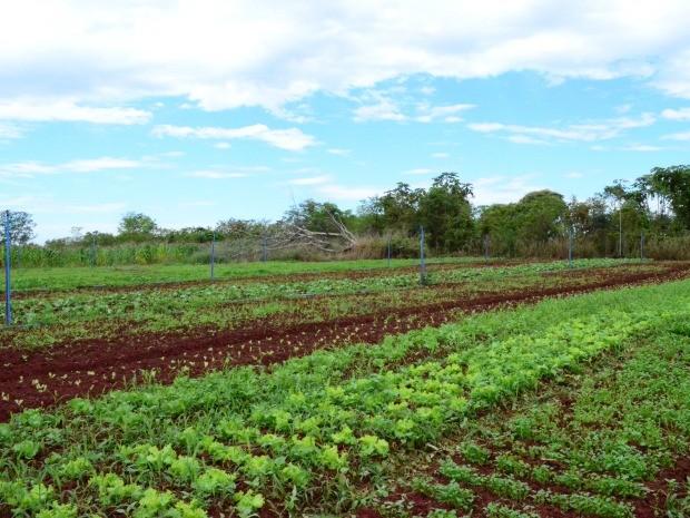 Cerca de 40% da merenda escolar é adquirido diretamente da agricultura familiar (Foto: Fernanda Bonilha/G1)