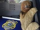 Bicho preguiça é resgatado ao tentar atravessar BR-116, na Bahia