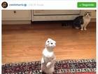 Calvin Harris vai a festa de Taylor Swift e posta fotos dos gatos dela