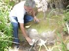 Projeto recupera 55 nascentes em ação contra a seca no Sertão de AL