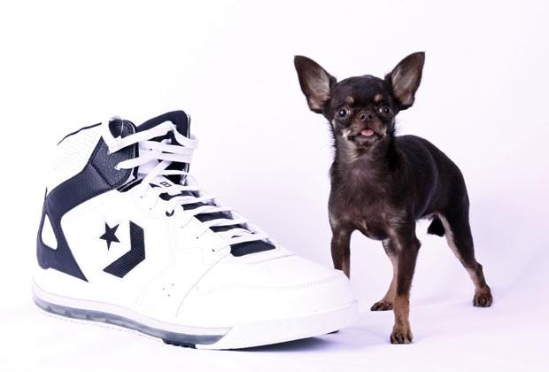'Miracle Milly' entrou para o Guinness, livro dos recordes, como menor cão do mundo (Foto: Guinness World Records 2014 Edition/AP)