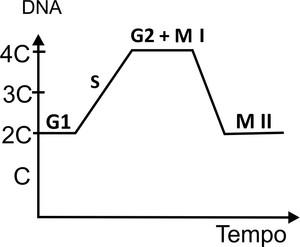Meiose, divisão dos cromossomos (Foto: Colégio Qi)