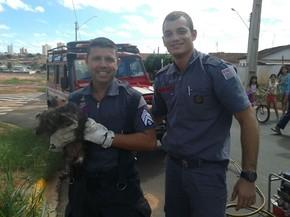Sargento Alexandre Trigo segura o cão que resgatou (Foto: Kall Rigamonti/Amizade FM)