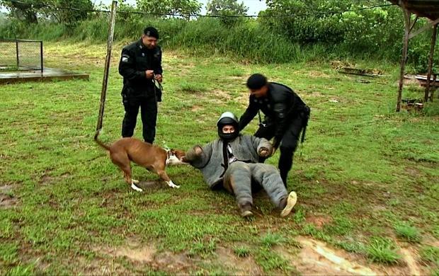 Repórter Basílio Magno passa por simulação com cães treinados (Foto: Bom Dia Amazônia)