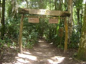 Trilha do Parque Nacional de Ubajara (Foto: Divulgação/ICMBio)