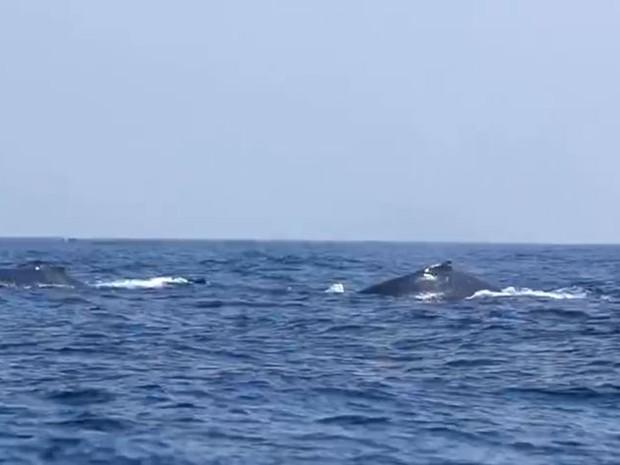 Grupo de baleias é visto no litoral capixaba (Foto: Reprodução/ TV Gazeta)