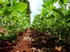 Plantio de soja e milho do Paraná supera ritmo de 2015