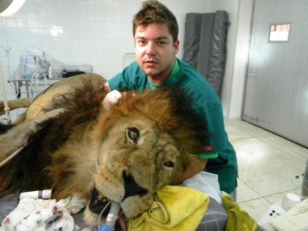 Veterinário também já realizou atendimento em leão  (Foto: Roberto Fecchio / Arquivo Pessoal)