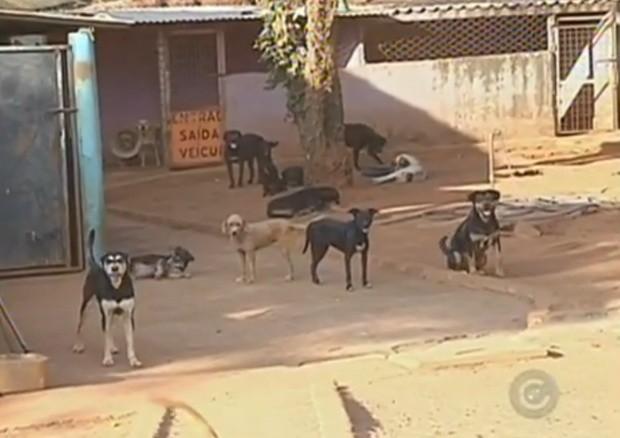 Em um abrigo de Rio Preto vivem quase 300 cães (Foto: Reprodução TV TEM)