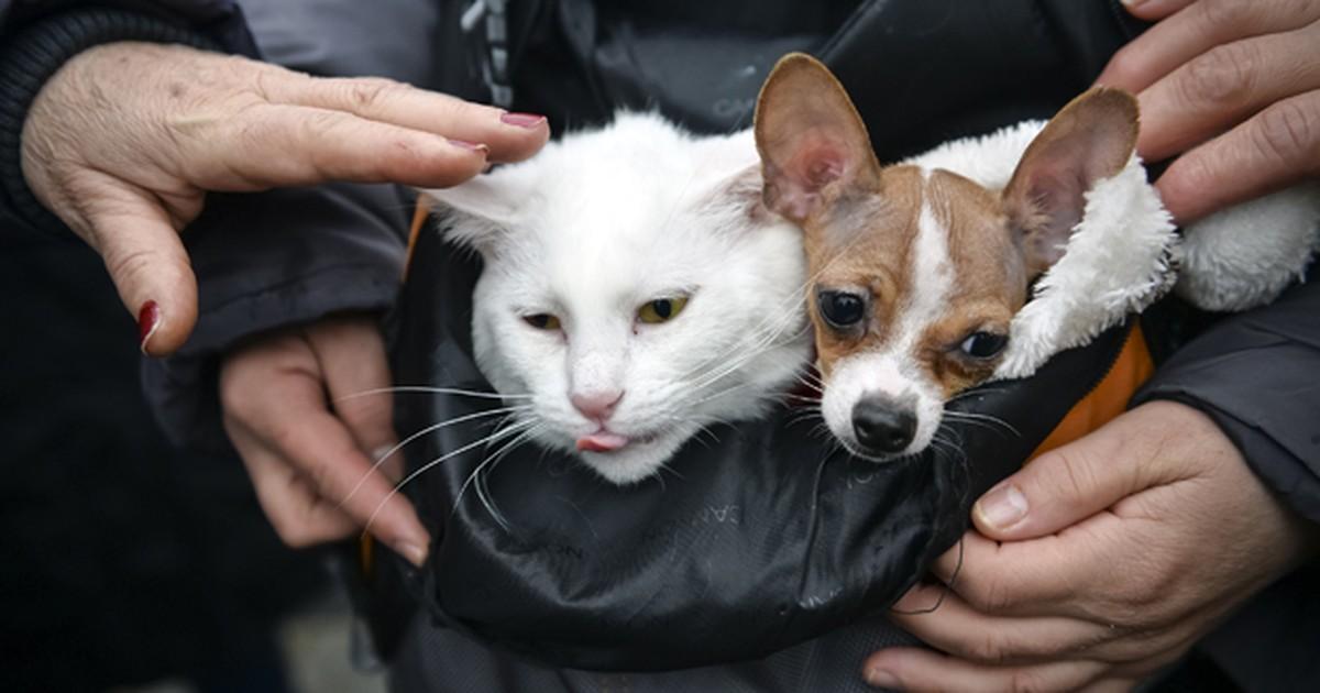 Em 'trégua', cão e gato dividem bolsa durante protesto na Romênia