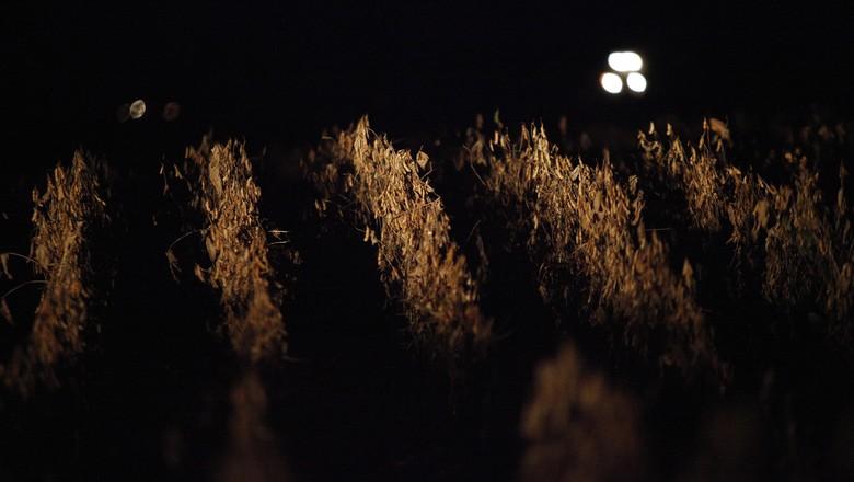 soja-grão-colheita-noturna-luis-eduardo-magalhaes-matopiba (Foto: Jonathan Campos/Ag. Gazeta do Povo)