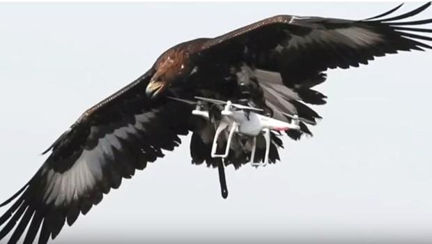 Águia durante treinamento na França para combater drones terroristas (Foto: Reprodução/YouTube)
