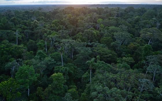 Amazon rainforest in Madre de Dios in Peru (Photo: Geoff Gallice / Wikimedia Commons)
