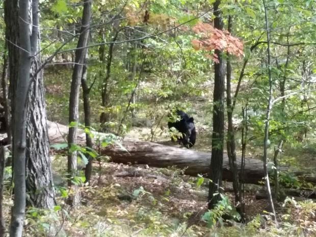 Jovem morto por urso nos EUA tirou fotos do animal antes de ser atacado thumbnail