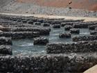 Peixes do Xingu percorrem canais artificiais após barramento do rio