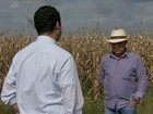Agricultores de MS seguram o milho à espera de uma reação do mercado