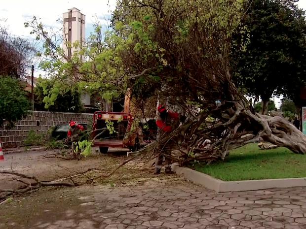 Árvore em frente à igreja foi arrancada (Foto: Inter TV/Reprodução)