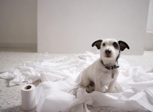 papel higiênico, cachorro;  (Foto: ThinkStock)