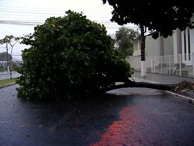 Árvore cai com a chuva no bairro Bento Ferreira, em Vitória (Foto: Reprodução/TV Gazeta)