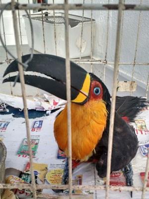 Tucano foi resgatado (Foto: Divulgação)