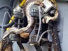 Veja 'cobras eletrocutadas' e outras imagens de tirar o fôlego