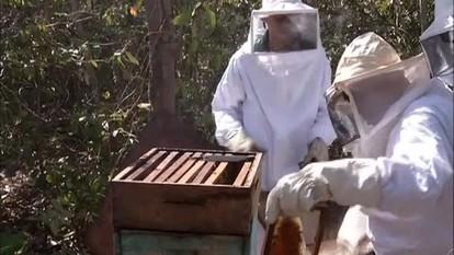 Momento do Agronegócio: Governo começa cadastramento de apicultores do Tocantins