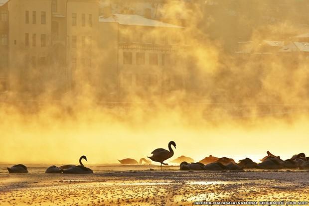 Esta foto feita por Jaromir Chalabala de uma madrugada fria em Praga. A silhueta dos cisnes no river Vltava aparece envolta em neblina misteriosa (Foto: Jaromir Chalabala/National Geographic Your Shot)