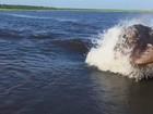 Veja 'perseguição a barco' e mais momentos de fúria de hipopótamos