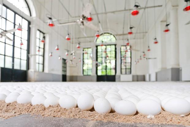 Artista colocou dezenas de milhares de ovos em sala com condições e temperatura controladas (Foto: Bruno Fahy/AFP)