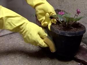 Vasos de planta são preocupação durante época de proliferação do mosquito da dengue (Foto: Reprodução / TV Tribuna)