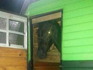 Égua é avaliada em R$ 40 mil (Foto: PRF/Divulgação)