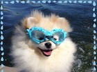 Karina Bacchi mostra foto do cachorro com óculos de mergulho